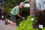 Arboretum Volunteer