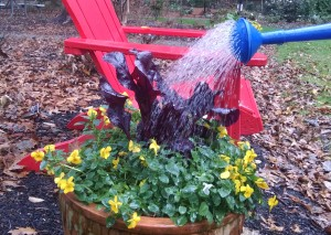 watering plant for winter freeze
