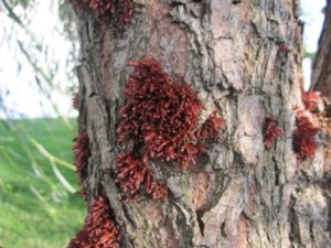 Image of fungus on tree