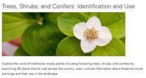 dogwood blossum