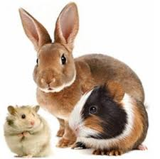 rabbit, guinea pig, and hamster