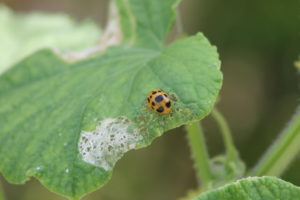 Cover photo for Attracting Beneficial Insects