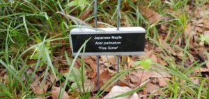 plant id stake