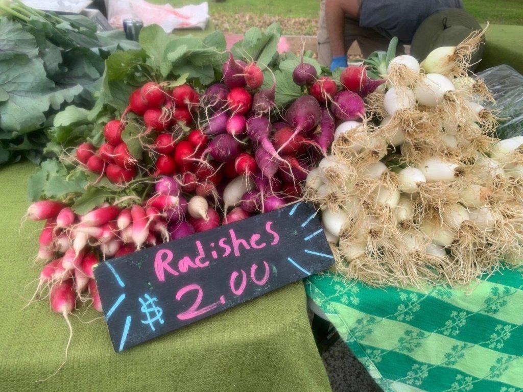 spring radishes