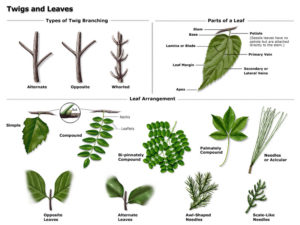 Twigs and leaves poster