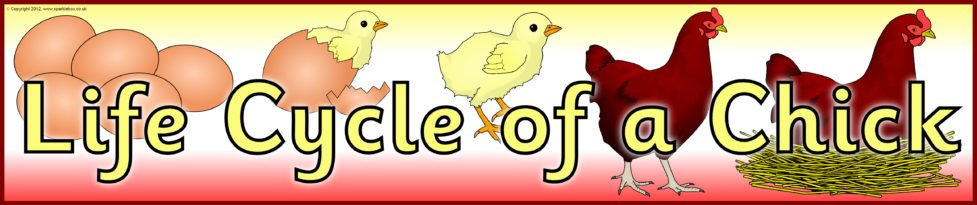 Life Cycle of a Chick banner