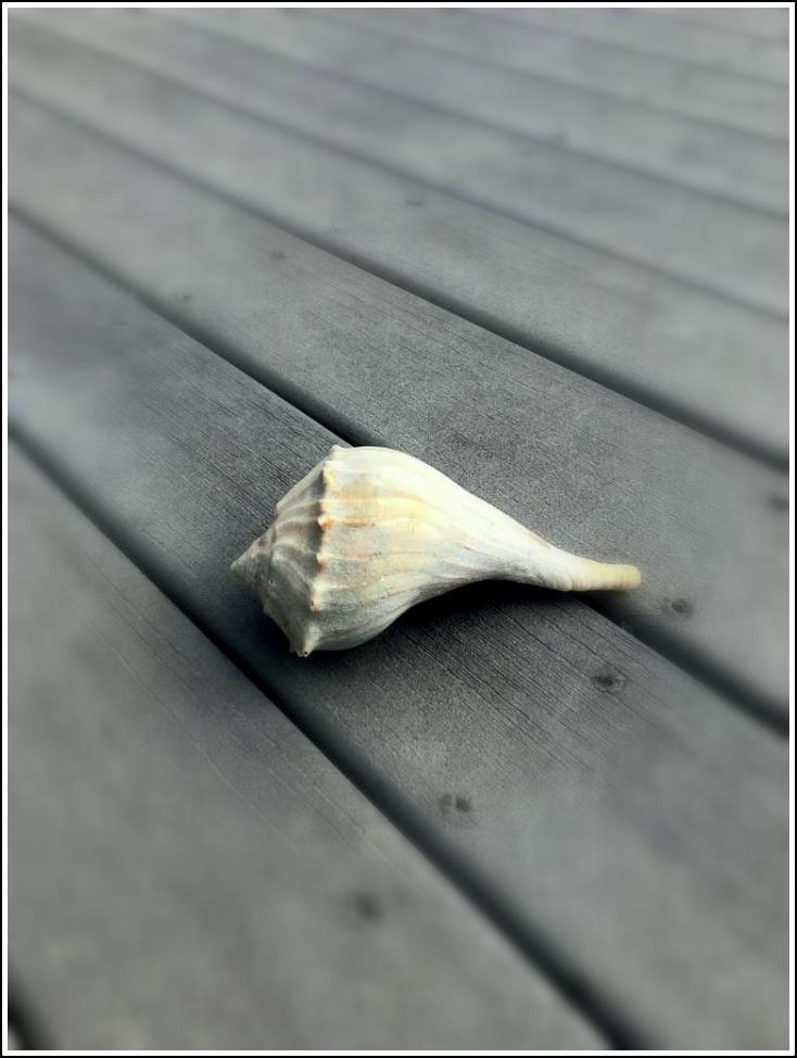 Stunning Shell