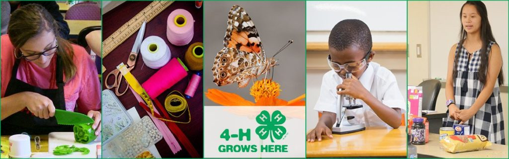 4-H Grows Here banner