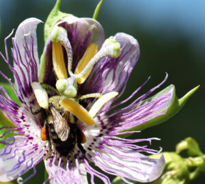 Cover photo for Register Now for a Fall Tour of the Pollinator Paradise Garden!